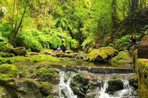 From Funchal: King's Levada Small Group Walk