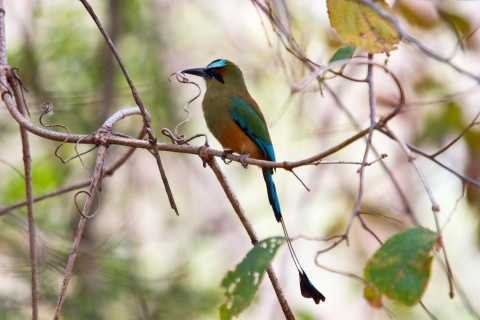 Liberia: Rincón de la Vieja Bird-Watching Tour