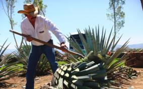 From Guadalajara: Tequila and Distillery Tour with Tastings