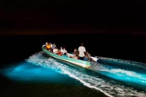 Puerto Escondido: Turtle Release en Bioluminescent Plankton