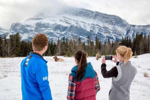 Banff: Winter Wildlife and Sightseeing Minibus Tour