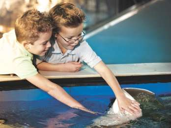 Tampa: Eintritt ohne Anstehen in das Florida Aquarium