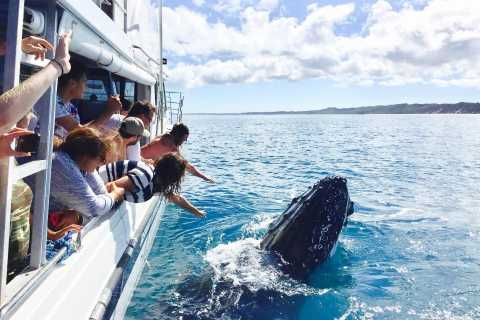Remote Fraser Island and Whale Experience