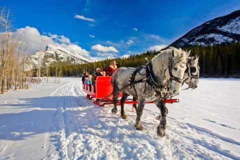 Banff: Family Friendly Horse-Drawn Sleigh Ride