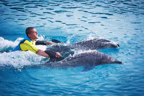 Dubai: Swim with Dolphins at Dolphin Bay
