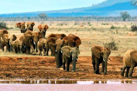 Tsavo East 2-Day Safari with Stay at Zomeni Lion Hill Lodge