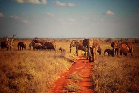 Tsavo East & Salt Lick Lodge Safari: 2-Tages-Tour