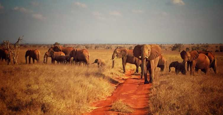 Tsavo East & Salt Lick Lodge Safari 2-Day Tour
