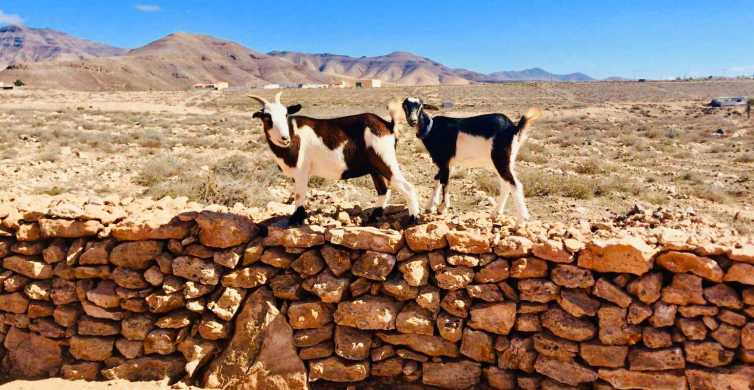 Fuerteventura: Trekking with Goats & Panorama Tour