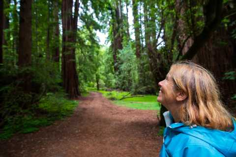 From San Francisco: Muir Woods Redwood Forest Morning Tour