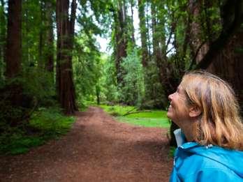 Ab San Francisco: Muir Woods National Monument Morgen-Tour