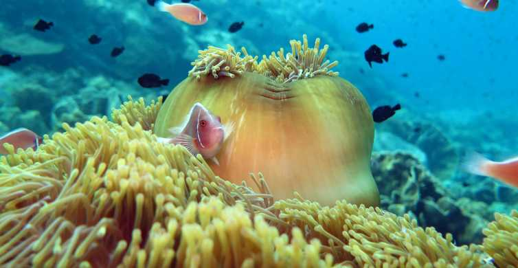 Koh Kood or Koh Rang: Snorkeling Day Trip with Buffet Lunch