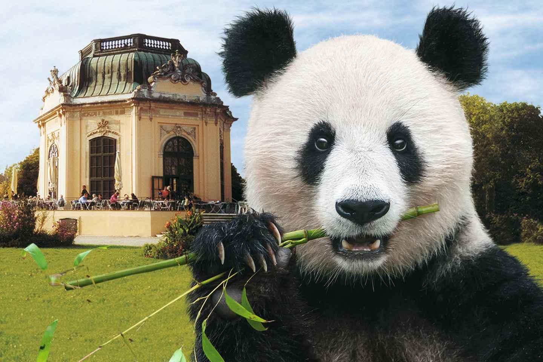 Wien: Tickets ohne Anstehen für den Tiergarten Schönbrunn