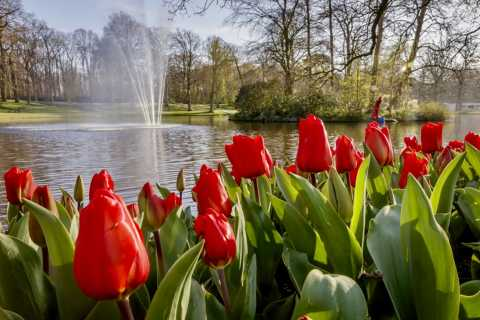Day Trip to Keukenhof Flower Park