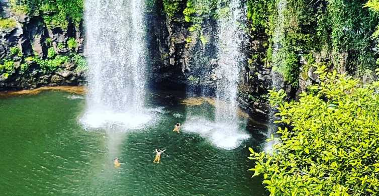 From Coffs Harbour: Rainforest and Waterfall Experience