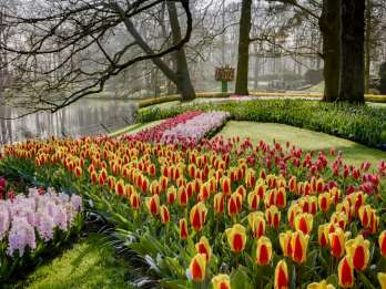 Keukenhof und Amsterdamer Schloss: Kleingruppen- oder Privattour