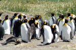 Punta Arenas: King Penguin & Tierra del Fuego Tour