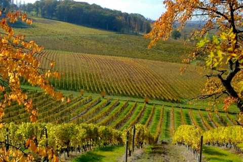 From Sarlat-la-Canéda: Private 5-Hour Wine Tour