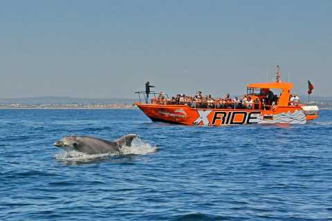 Albufeira: 2.5-Hour Dolphin Watching and Caves Cruise