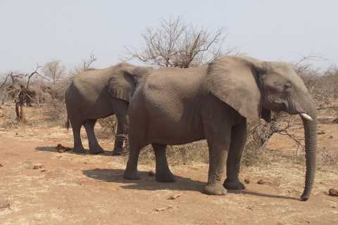 From Victoria Falls: Zambezi National Park Game Drive