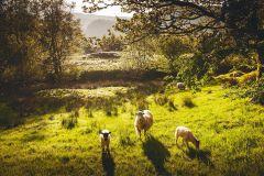De Manchester: Lake District, Windermere e Lancaster