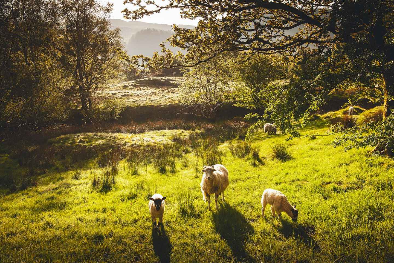 Ab Manchester: Lake District, Windermere und Lancaster