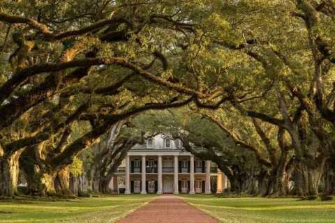 New Orleans: Plantation Visit and Pontoon Swamp Tour