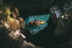 Cabo Kamenjak: passeio de caiaque com experiência em cavernas