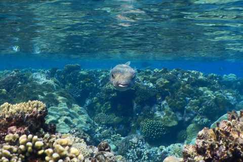 Vanuit Marsa Alam: snorkeltrip naar Hamata-eilanden