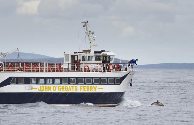 Bild Ab John O'Groats: Wildtierbootsfahrt