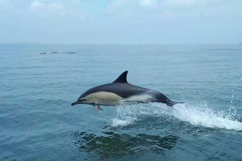Lisbon: 3-Hour Dolphin Watching Boat Tour