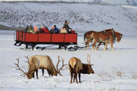 Jackson: Grand Teton and National Elk Refuge Winter Day Trip