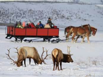 Jackson: Grand Teton und National Elk Refuge Wintertagesausflug