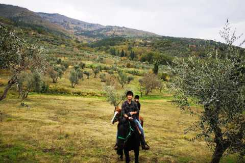 From Florence: Horseback Ride and Olive Oil Tour with Lunch