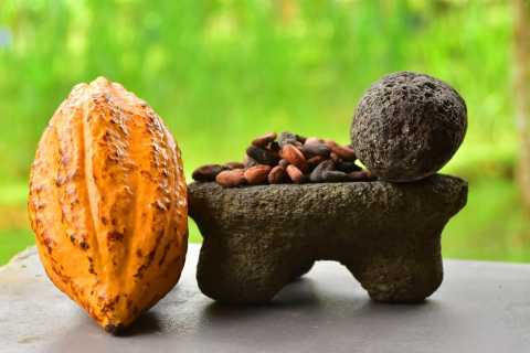 Costa Rica: 2-Hour Chocolate Experience and Plantation Tour
