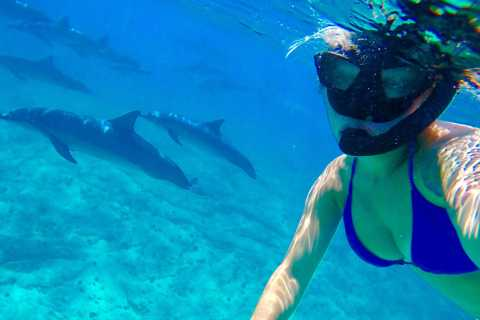 Hurghada: Swimming with Dolphins & Snorkeling Tour & Lunch