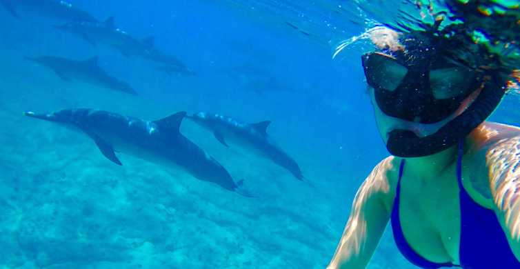 Hurghada: baignade et plongée avec les dauphins et déjeuner