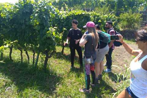 Van Taormina: dagtour Etna & wijn