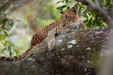 Wilpattu National Park Safari Tour from Colombo
