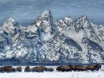 Grand-Teton-Nationalpark: Wildtier-Safari-Abenteuer