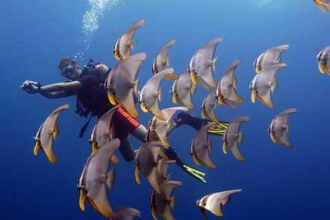 From Koh Kood: Certified Dive Trip
