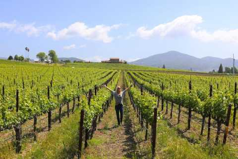 From San Diego: Temecula Wine Tour with Tastings and Lunch