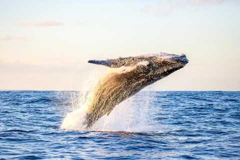 Waikiki Beach: Eco-Friendly Morning Whale Watching Excursion