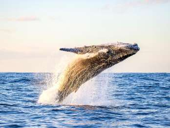 Waikiki Beach: Umweltfreundliche Walbeobachtungstour
