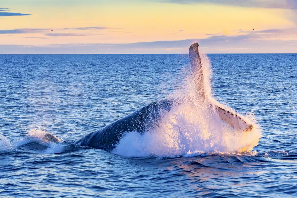 Best Eco-Friendly Whale Watching Tours In Oahu