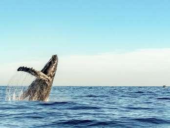 Waikiki: Umweltfreundliche Walbeobachtungstour am Nachmittag