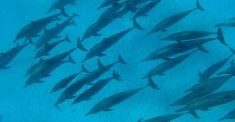 Marsa Alam: Satayah Reef Overnight Boat Trip with Snorkeling