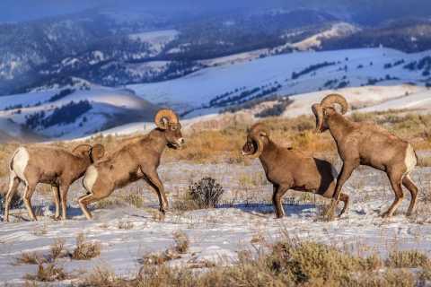 Jackson Hole: Grand Teton National Park and Petroglyph Tour