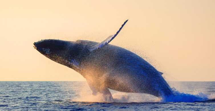 Maui: 2-Hour Whale Watching Excursion from Lahaina Harbor