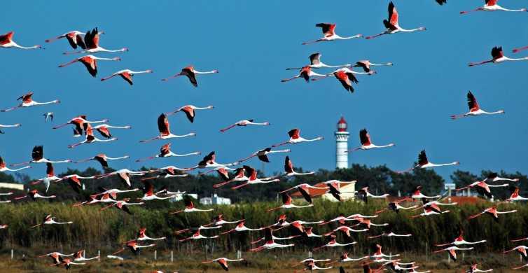 Interior Algarve & Guadiana River Private Day Tour